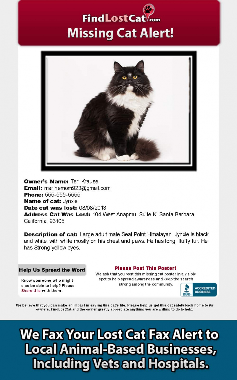 editable find lost cat  the 1 lost & found cat website in america found cat poster template doc