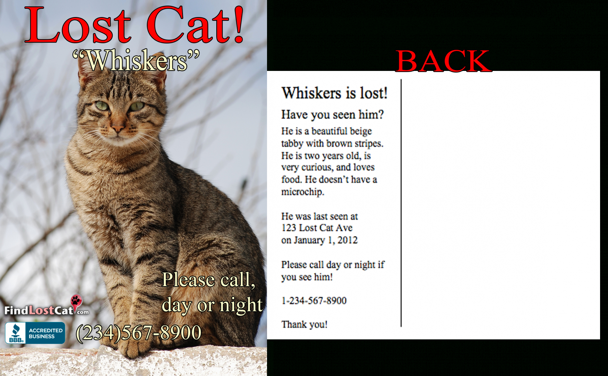 editable find lost cat  the 1 lost & found cat website in america found cat poster template excel