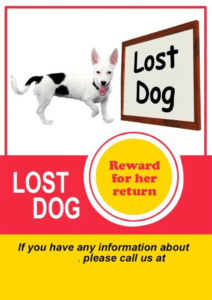 free 20 lost cat  dog flyer & poster templates for microsoft word lost animal poster template doc