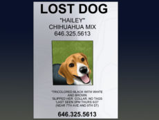 how to make an effective missing pet poster with pictures lost animal poster template sample